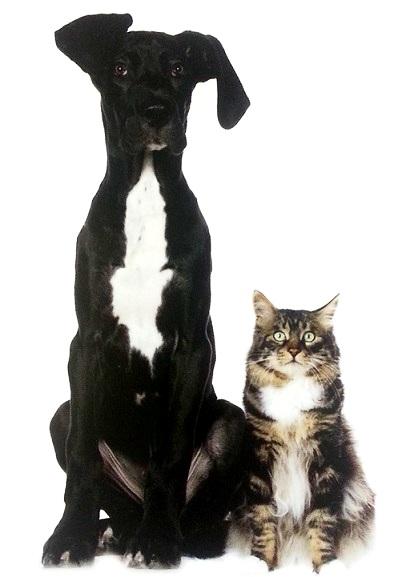 dog_cat