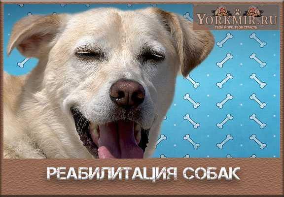 Восстановление собаки после операции на суставах движения в височно-нижнечелюстной сустав