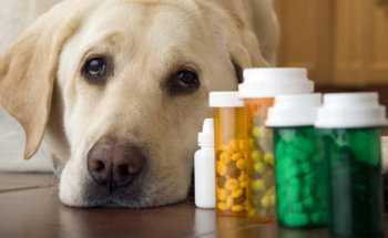 Сколько мг глюкозамина дать собаке в день от больных суставов профилактика заболеваний сустава