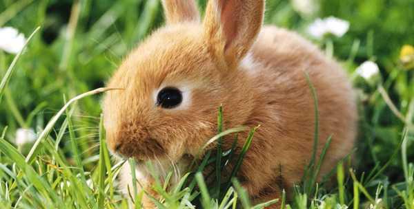 Зерновое меню кроликов: изучаем все аспекты кормления 77
